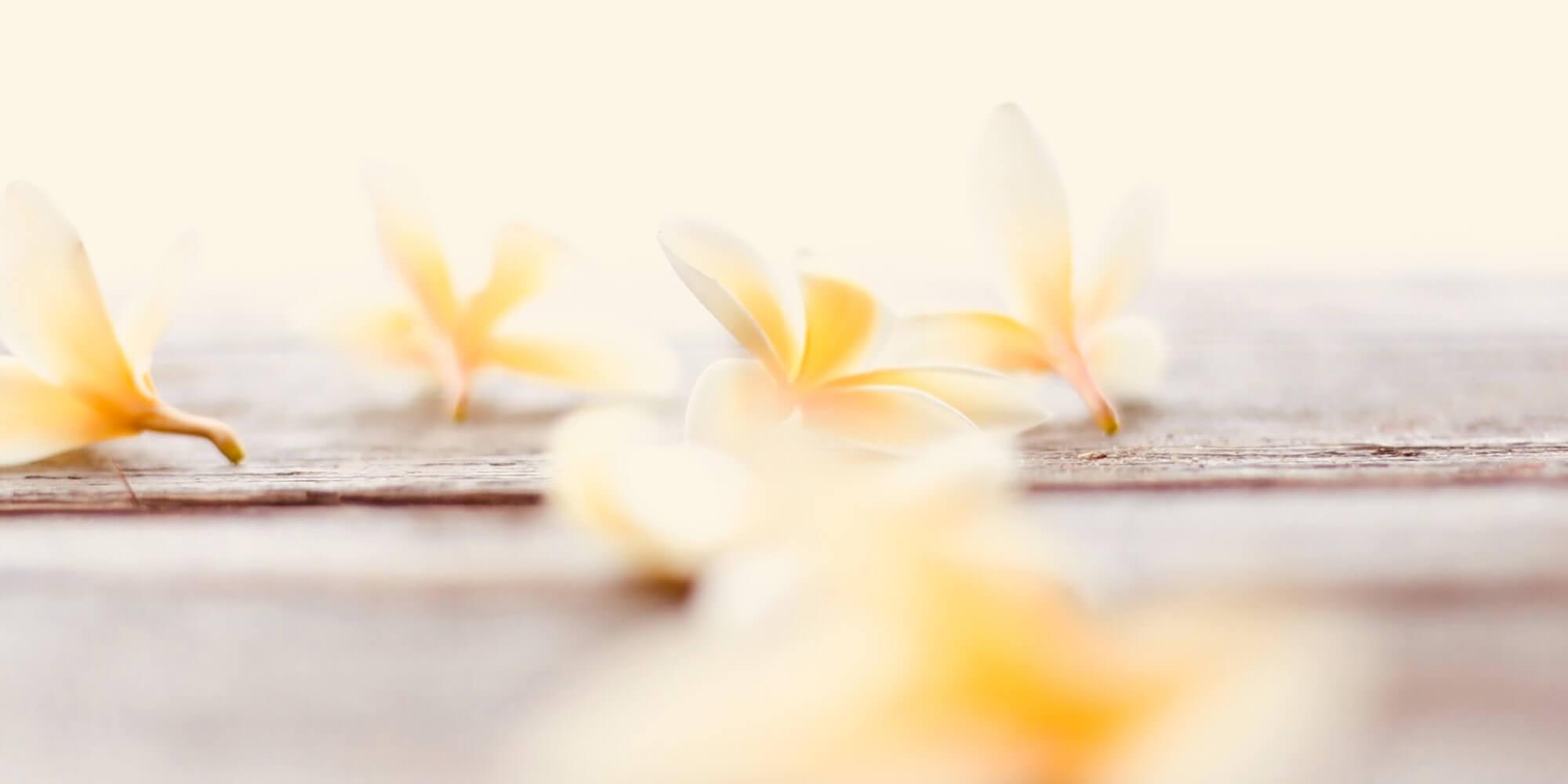 vanilla blossoms